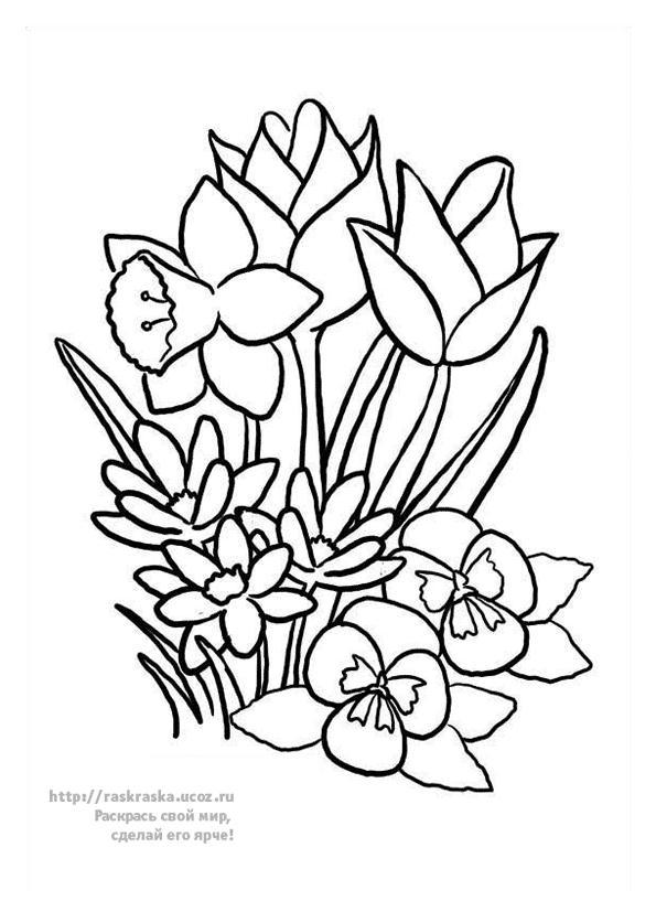Картинки раскраски цветы тюльпаны 3